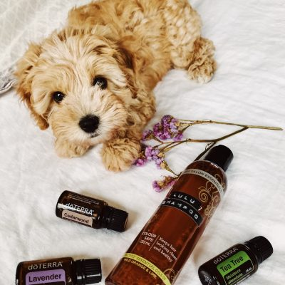 Natural Puppy Shampoo with Essential Oils